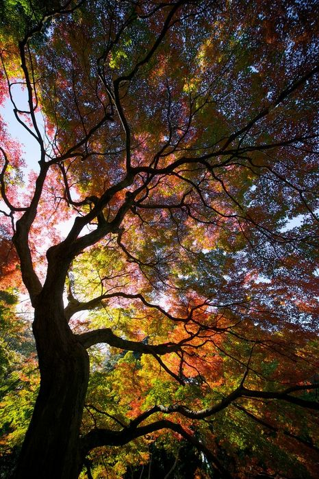 colorful forest tree sun