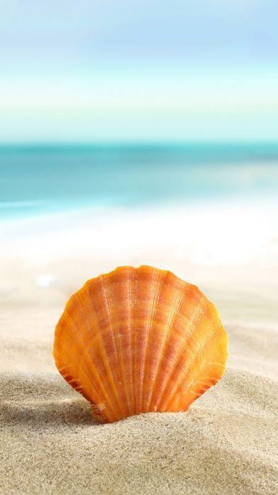 beach sand mussel 1080x1920