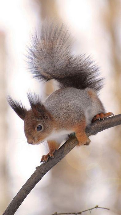 squirrel tree 1080x1920