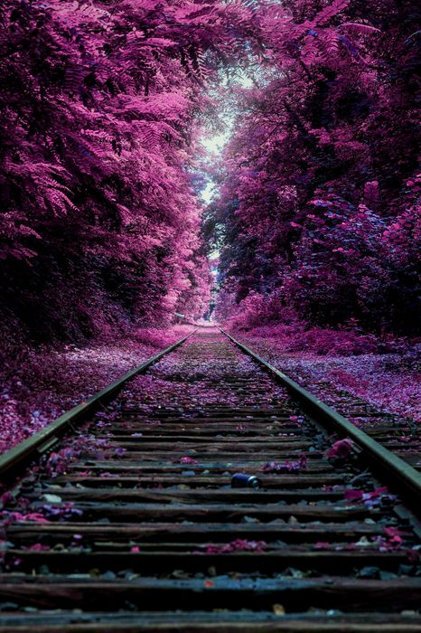 violet railway railroad train road forest travel sky landscape
