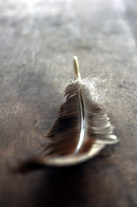 feather table macro wallpaper