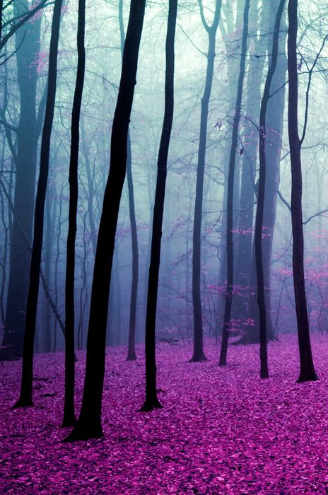 magic forest violet leafs