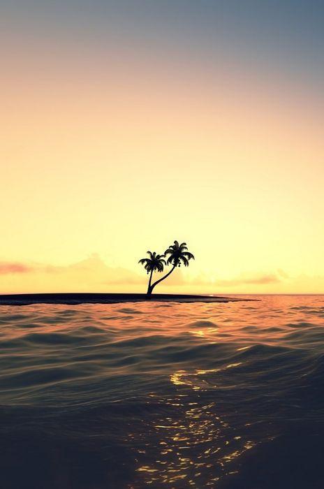 ocean palm water sunset