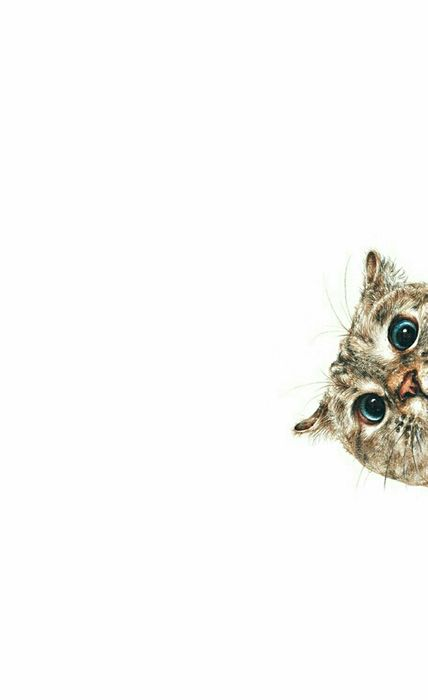 bo cat animal cartoon eye wildlife art beak wild design background
