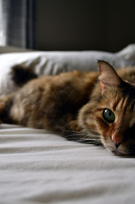 cat eyes cite 1280x1920