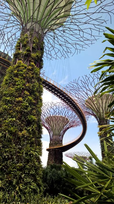 singapore palm sky tree summer garden travel beach landscape grass