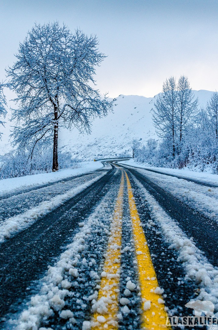 road snow trees winter