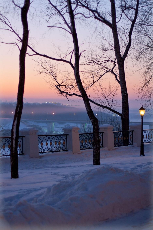 trees snow sunset lights