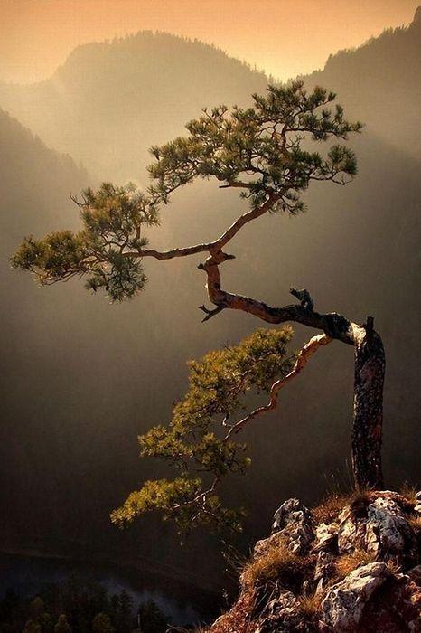 alone tree mountain
