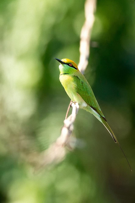 green bird tree forest branch