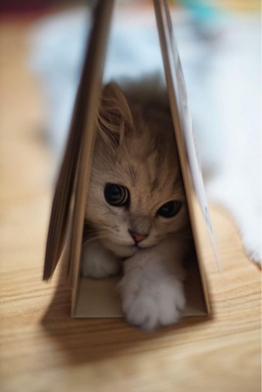 kitten grey cat play cute animal