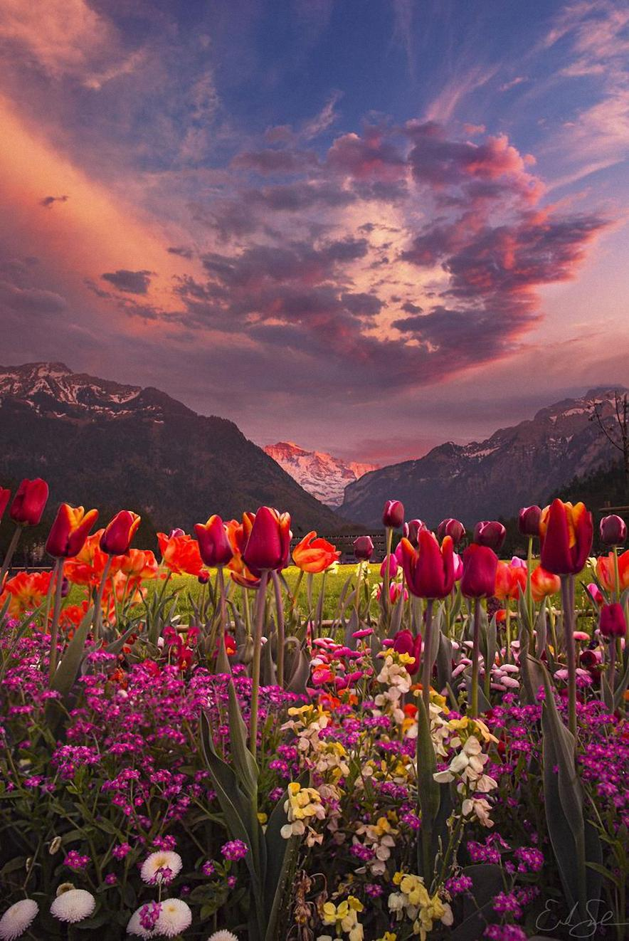 mountains flowers cloud pink color wallpaper