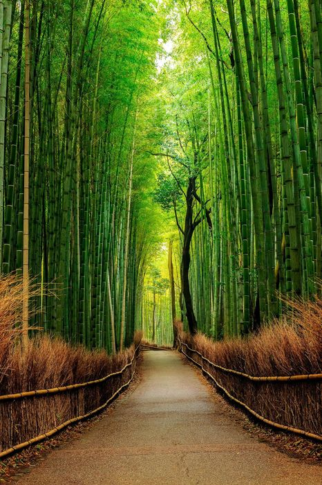 green trees bamboo forest trail
