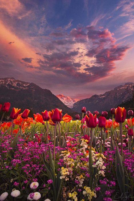 mountains flowers cloud pink color wallpaper
