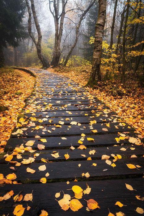 park leaves yellow autumn tree