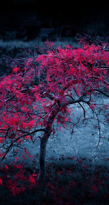 red tree leaves fog light purple autumn iphone