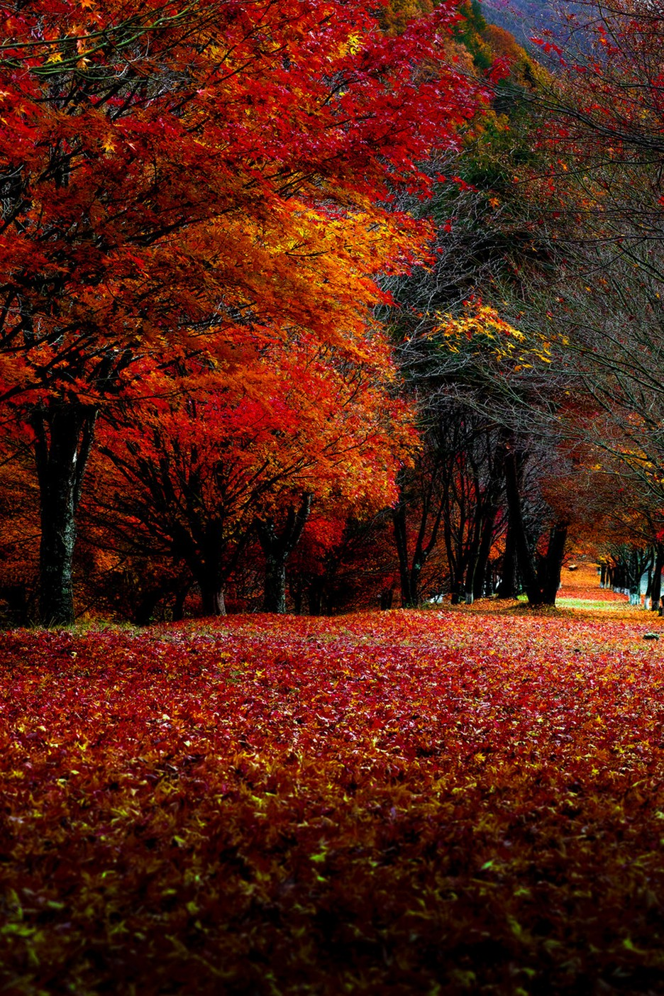 autumn park red orange leaves