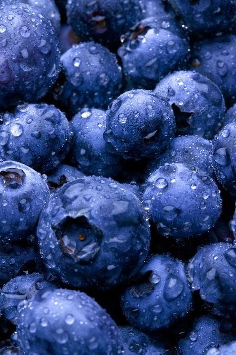 blueberries plant drops water macro