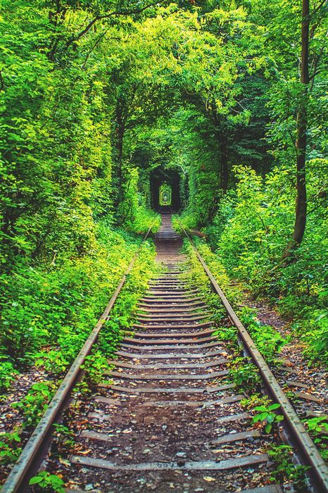 railway green forest tunnel