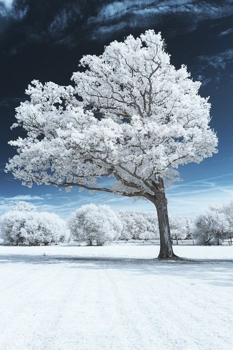 winter white tree forest