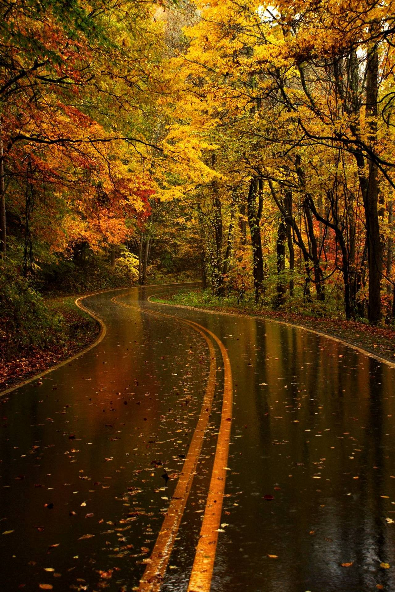 Autumn Road Moist Leaves Orange Forest 1280x1920