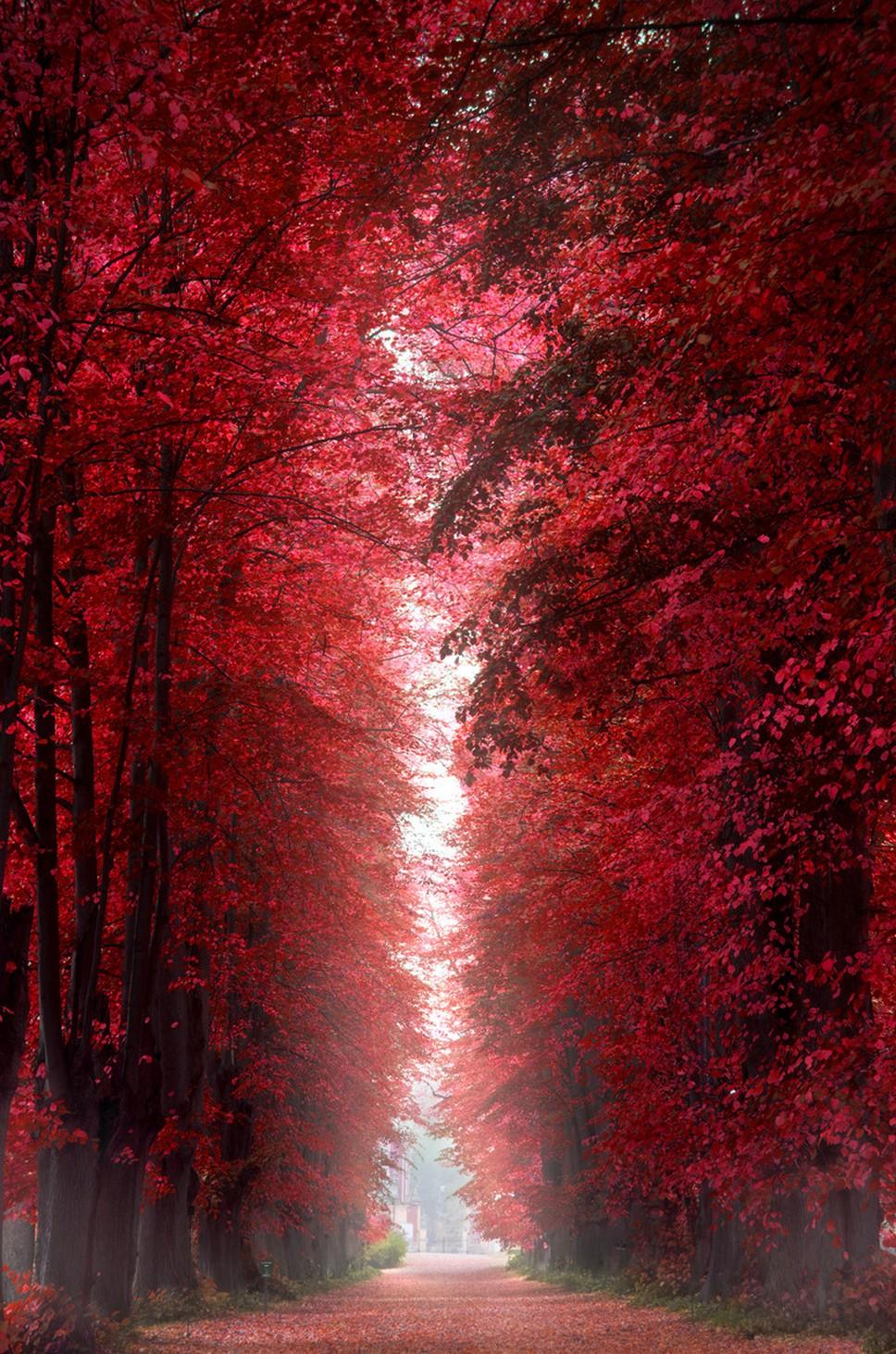 burning red forest denmark