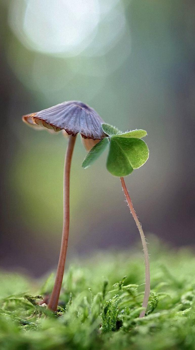 macro mushroom leave grace