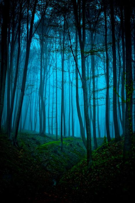 blue forest greeen black color
