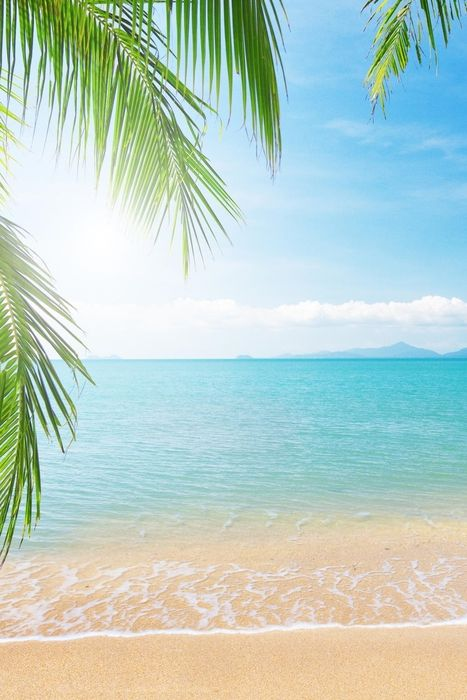 tropical beach live wallpaper palm