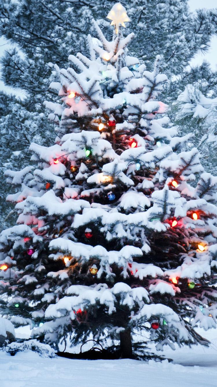 christmastree snow outside forest lights