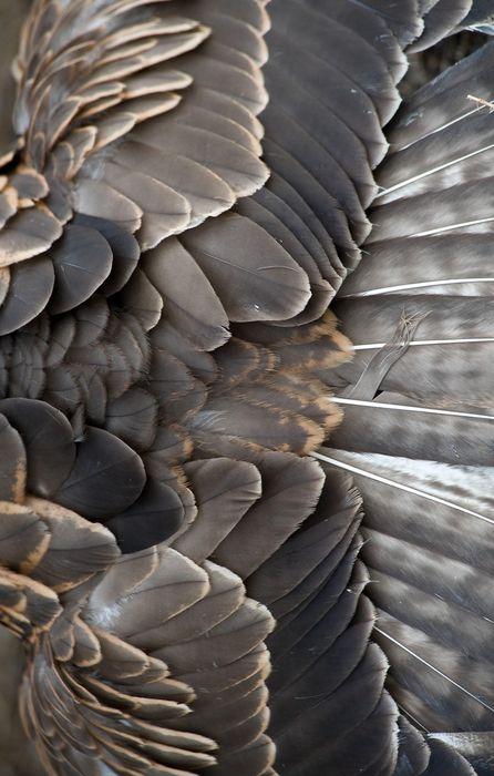 feather grey wallpaper retina
