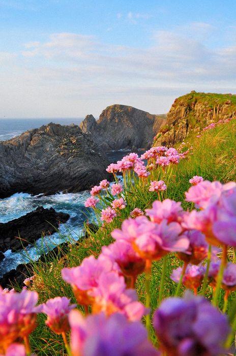inspiring nature flowers