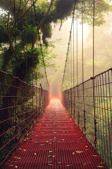 red bridge forest