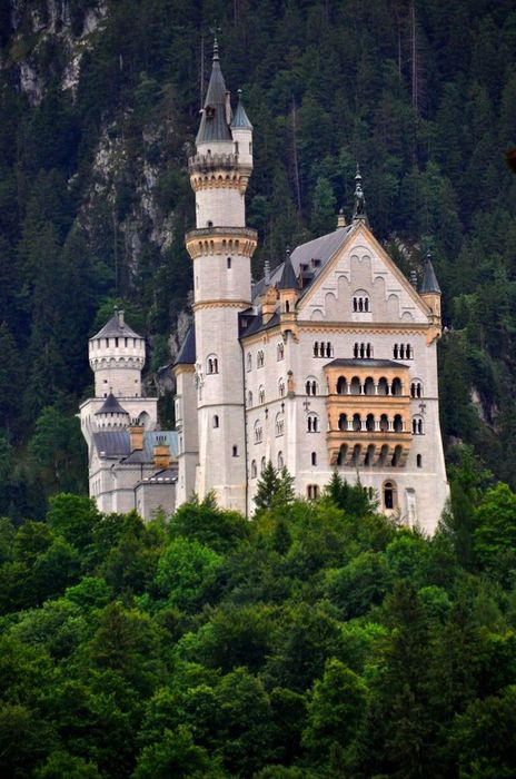 neuschwanstein castle trees 750x1334