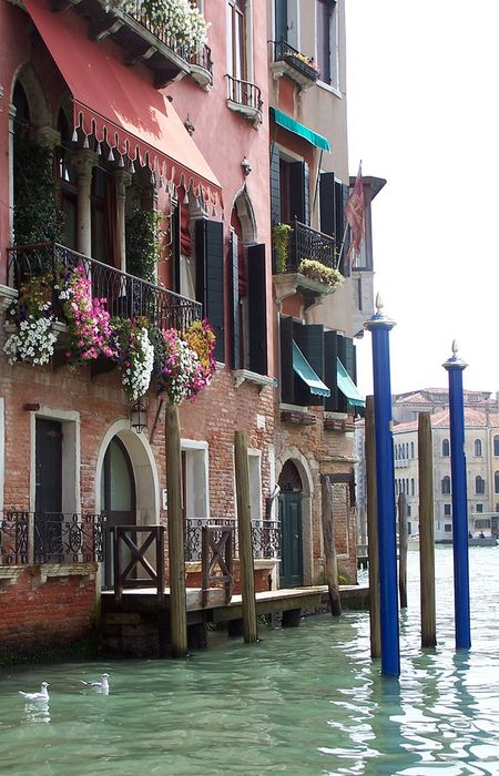 venice water house flowers