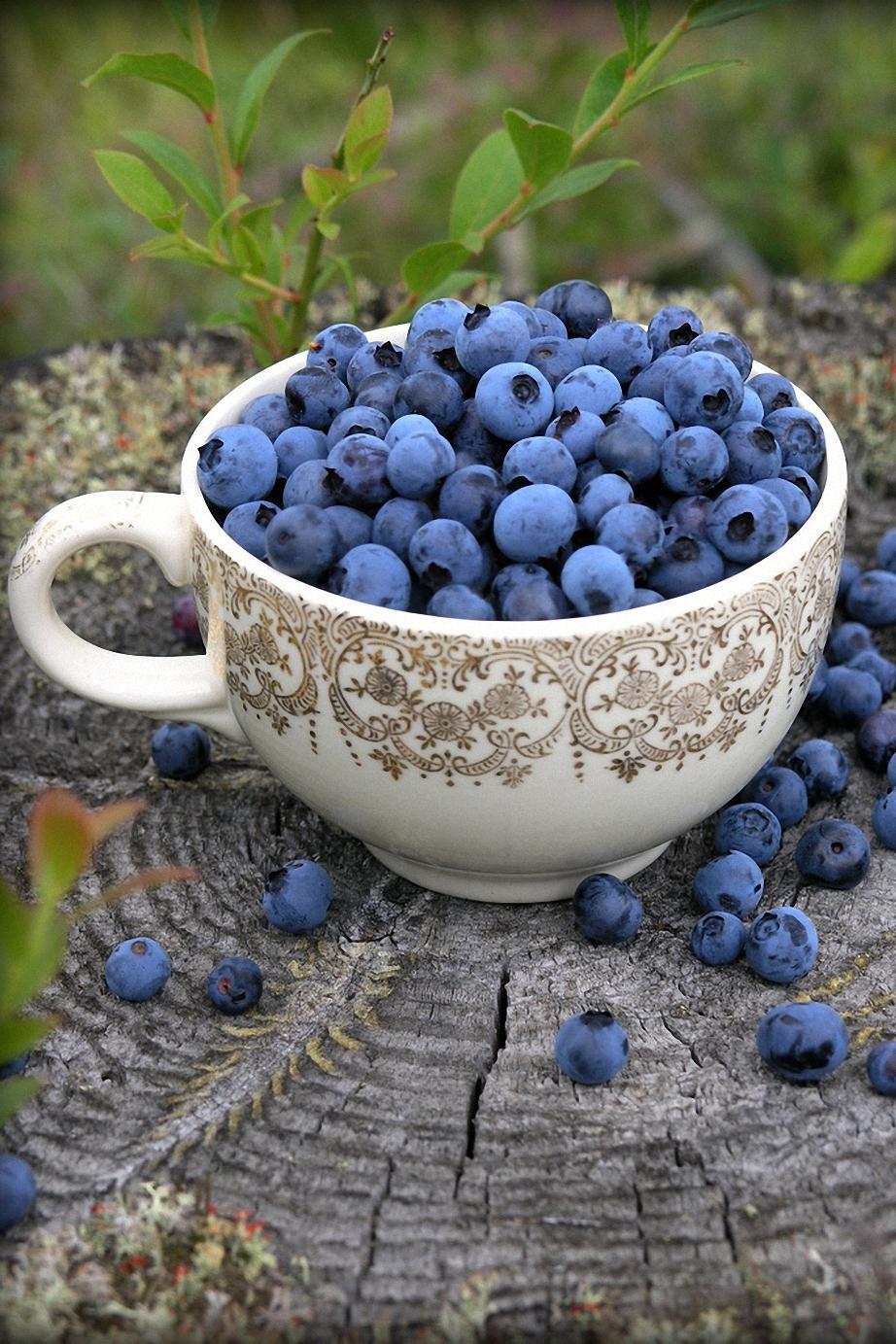 bilberries food photo cup