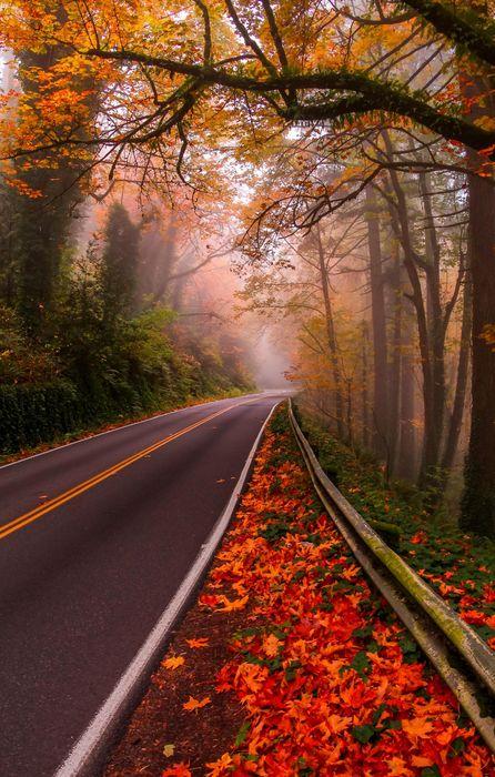 road autumn trees orange red forest iphone retina