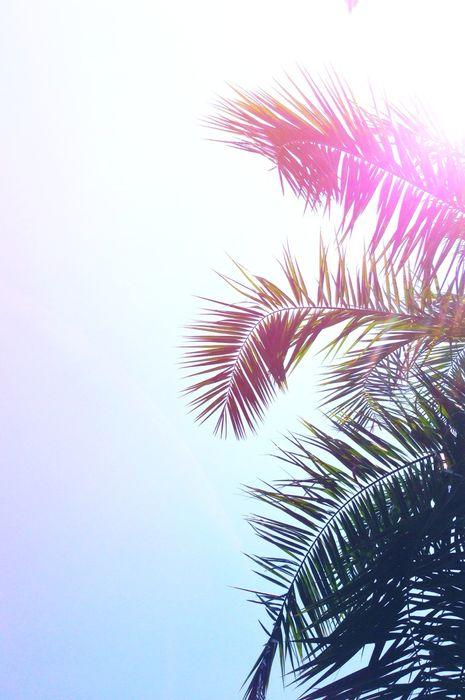 summer palm sun