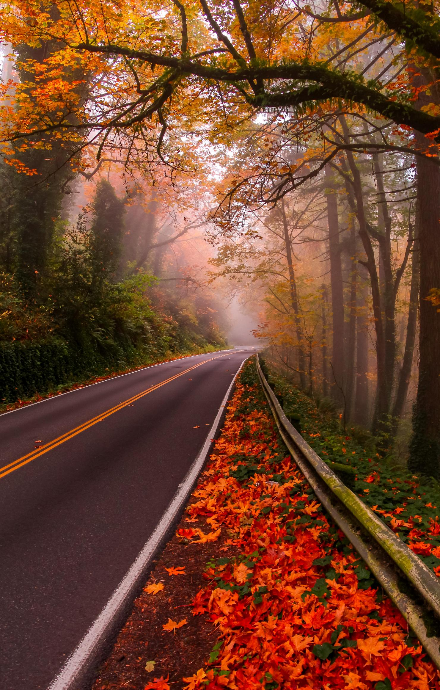 Forests Leaves Autumn Red Autum Road Forest k Wallpapers for HD