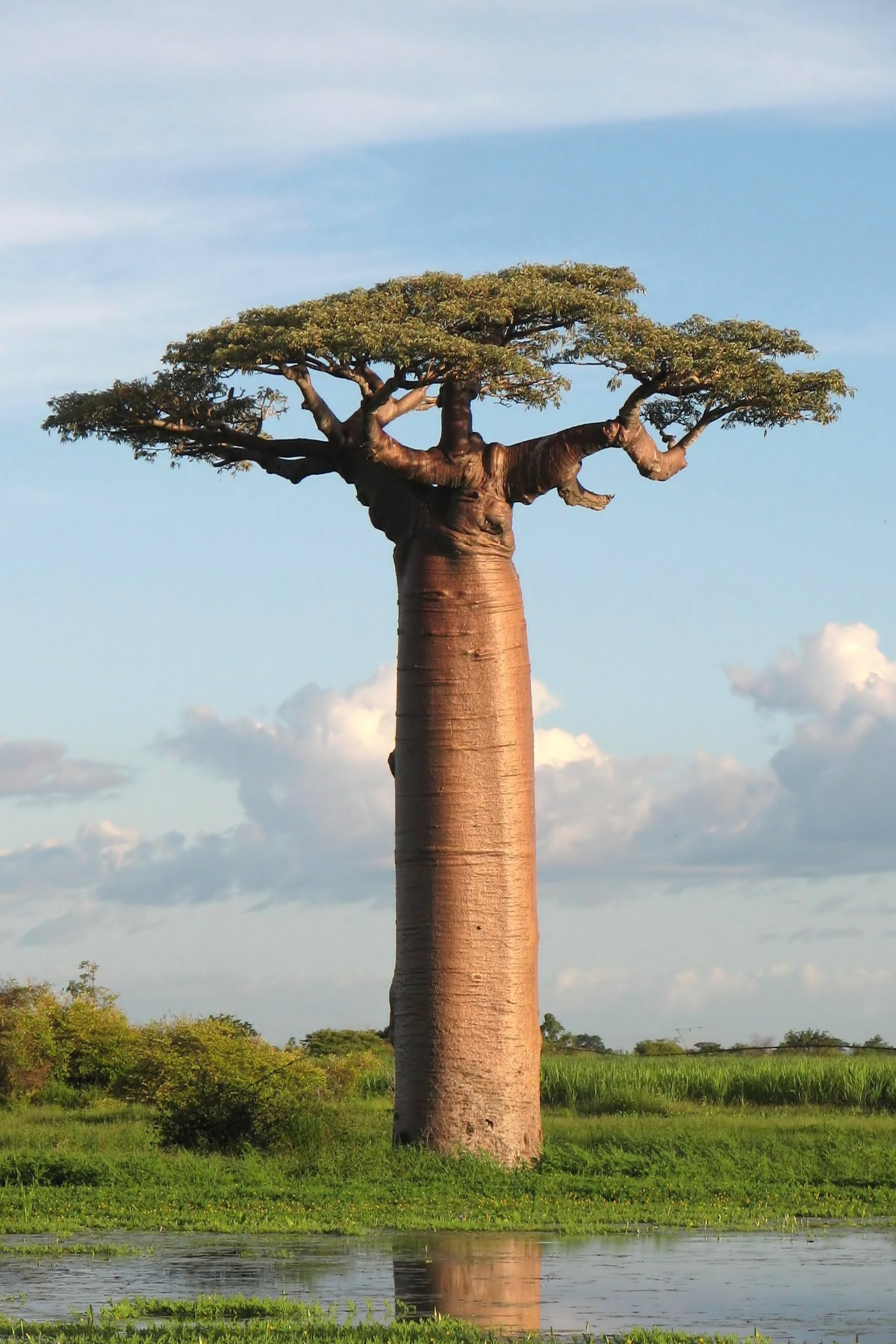 Baobab Africe Lake Sky Wild Nature