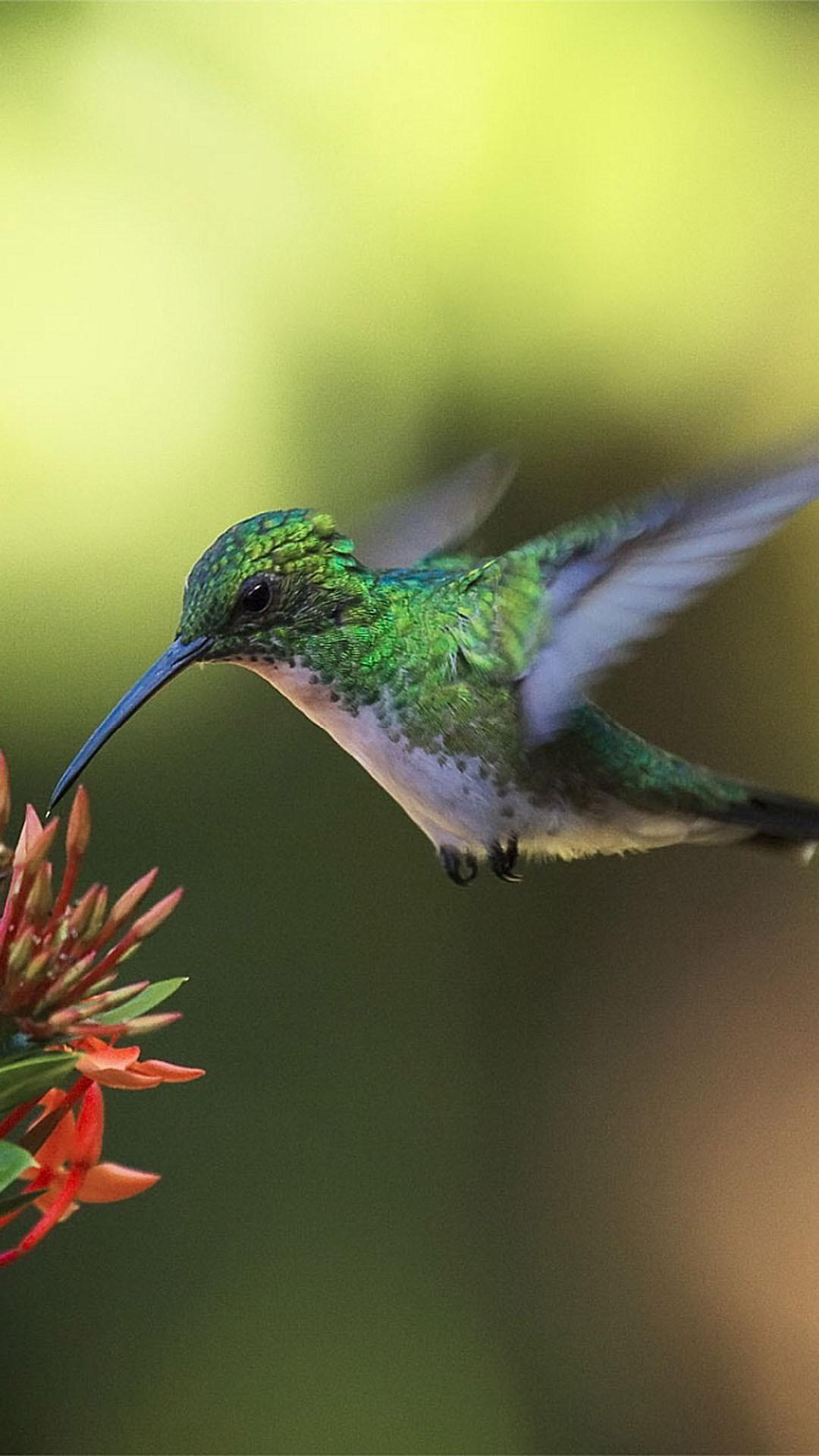 hummingbird bird colibri nectar 1080x1920