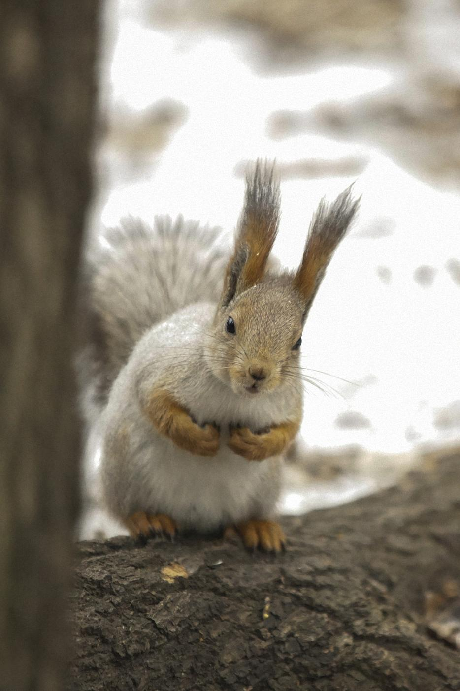 squirrel forest funny animal