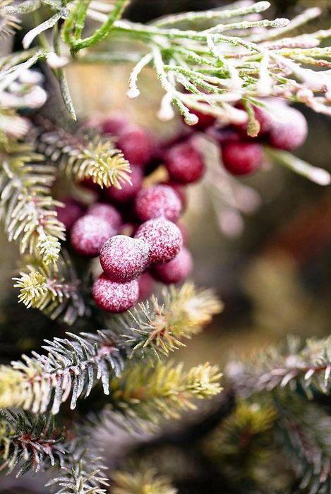 macro berries tree wallpaper