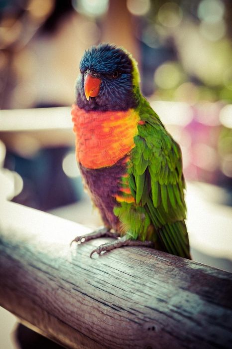 perrot colorful wallpaper