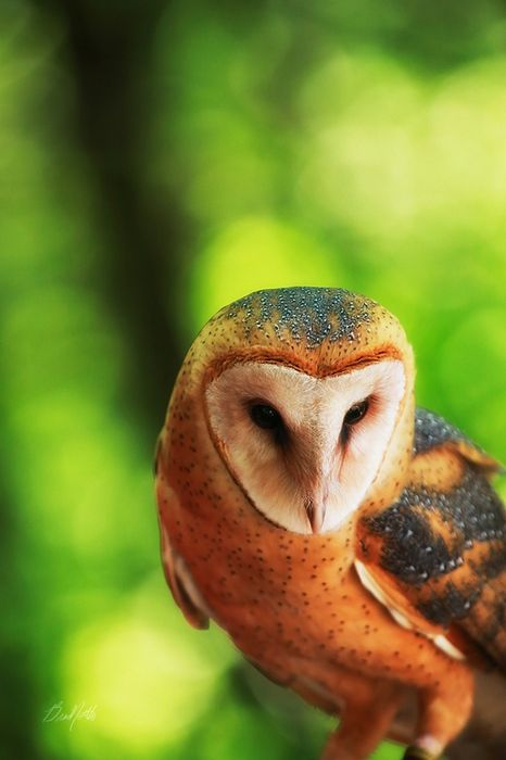 beautiful owl forest look