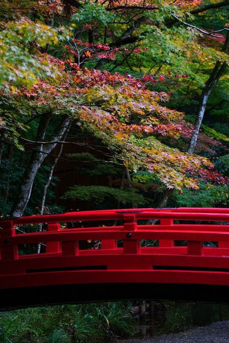 japan garden red bridge trees