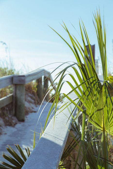 sun road beach palm