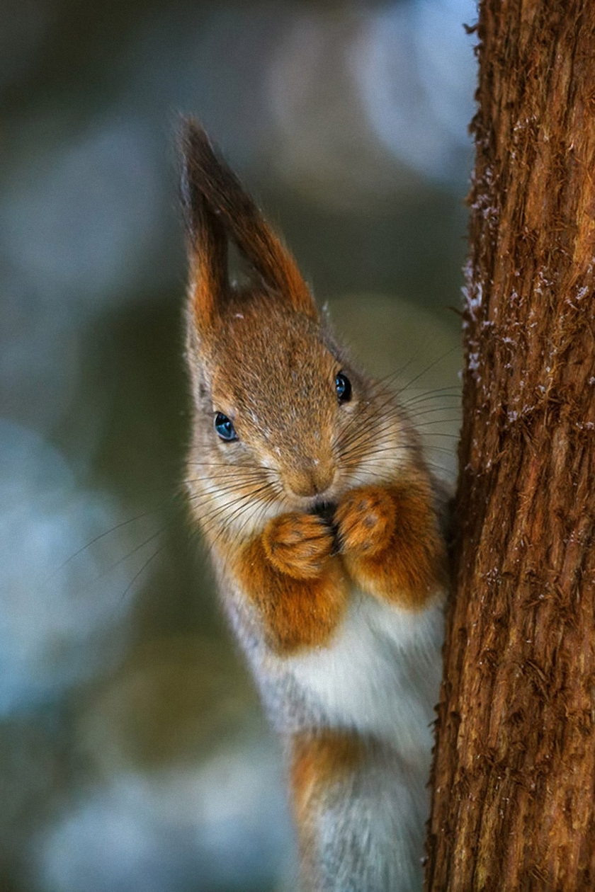 squirrel nut tree animal