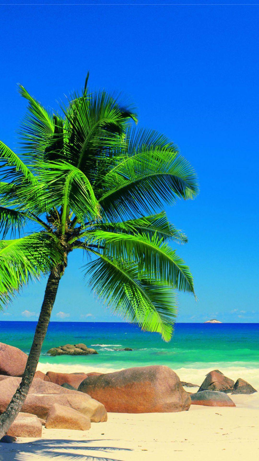 caribbean palm ocean 1080x1920