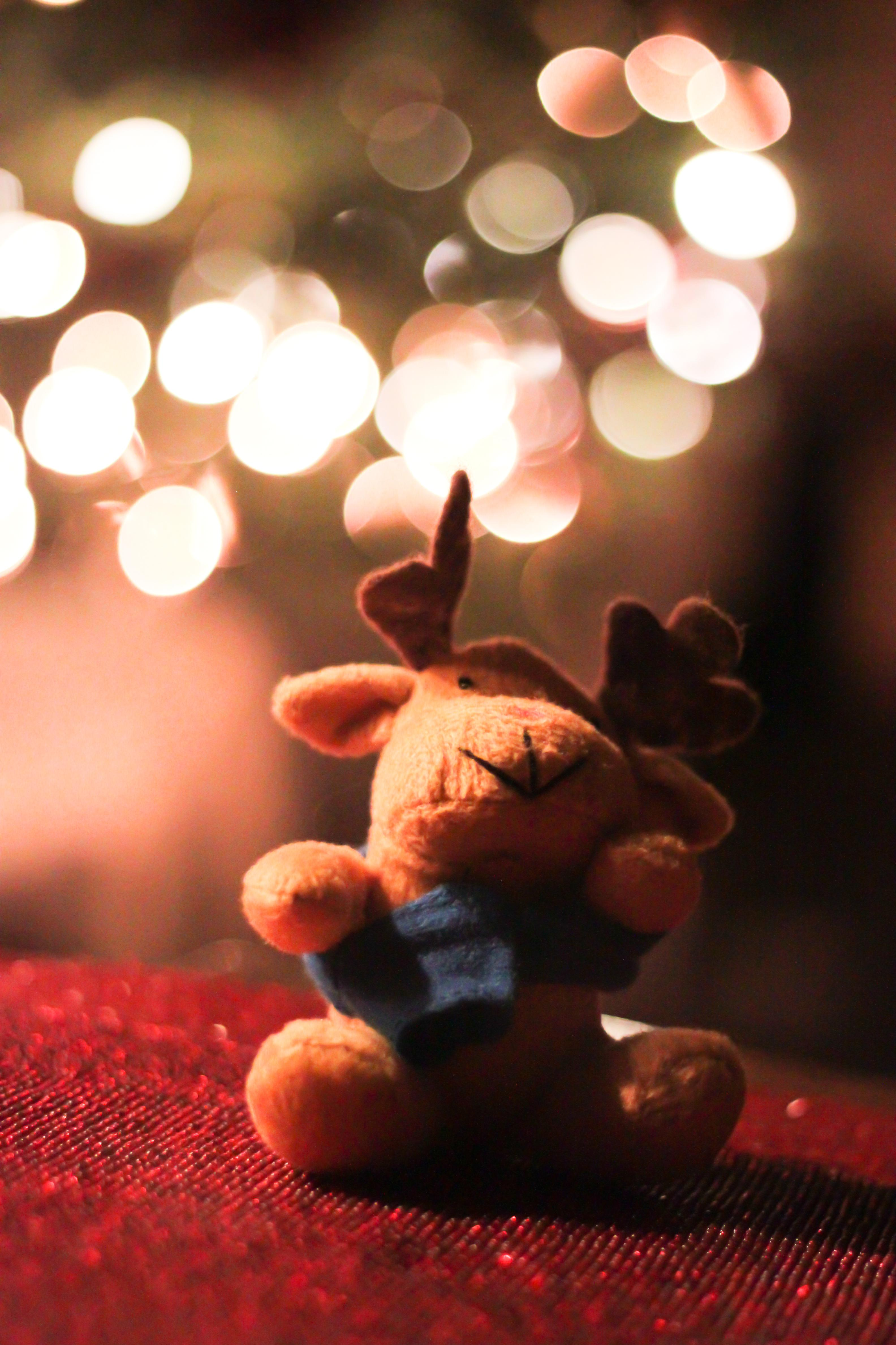 christmas reindeer toy light bokeh